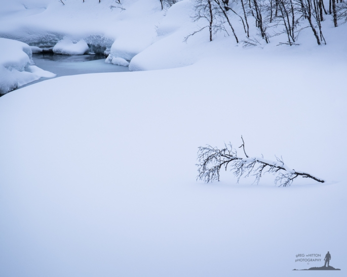 Greg_Whitton_Photography_Polar2015_Web-40